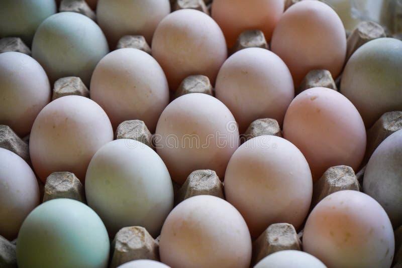 Ovos frescos na bandeja do ovo fotografia de stock royalty free