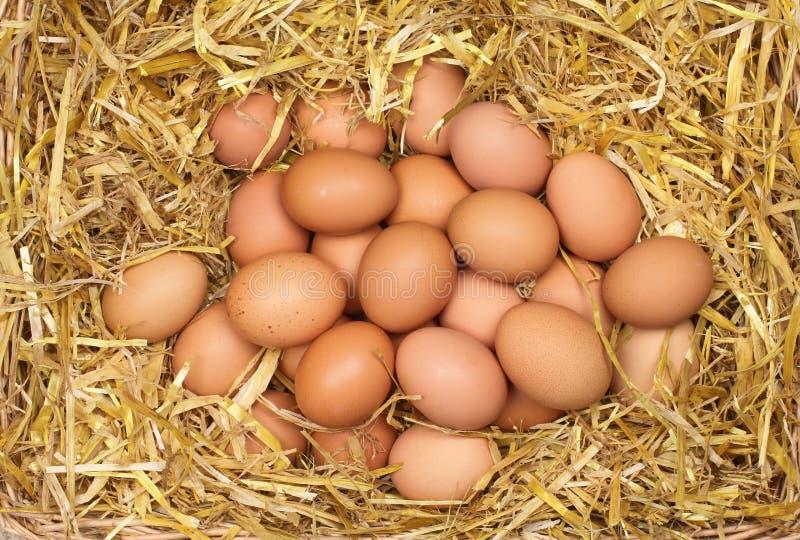 Ovos frescos na palha fotos de stock