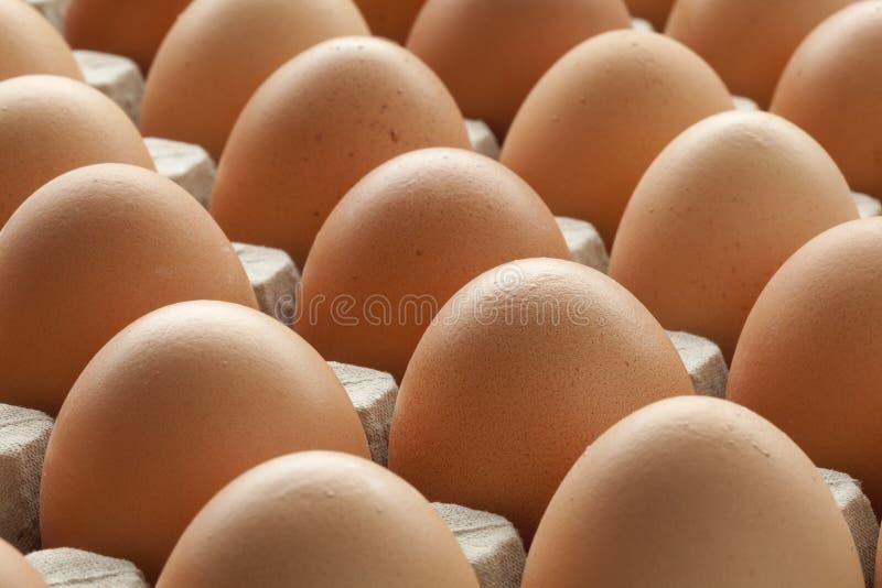 Ovos marrons orgânicos na caixa da caixa fotos de stock royalty free