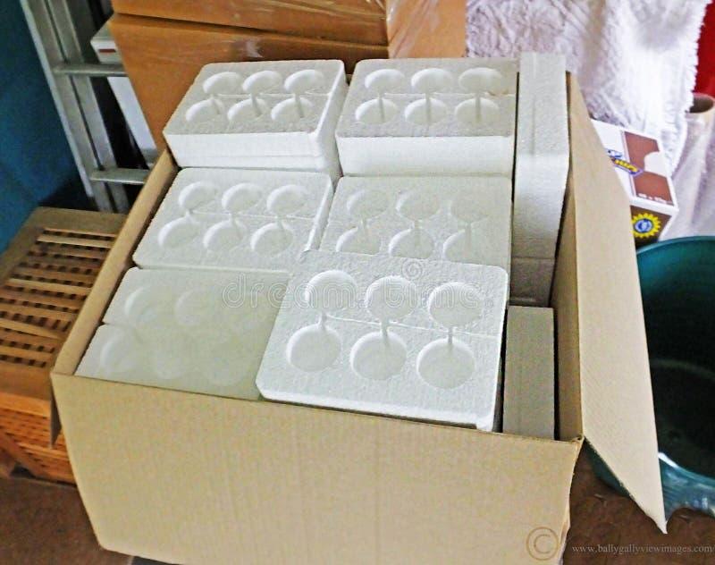 Ovos na caixa do poliestireno para afixar foto de stock