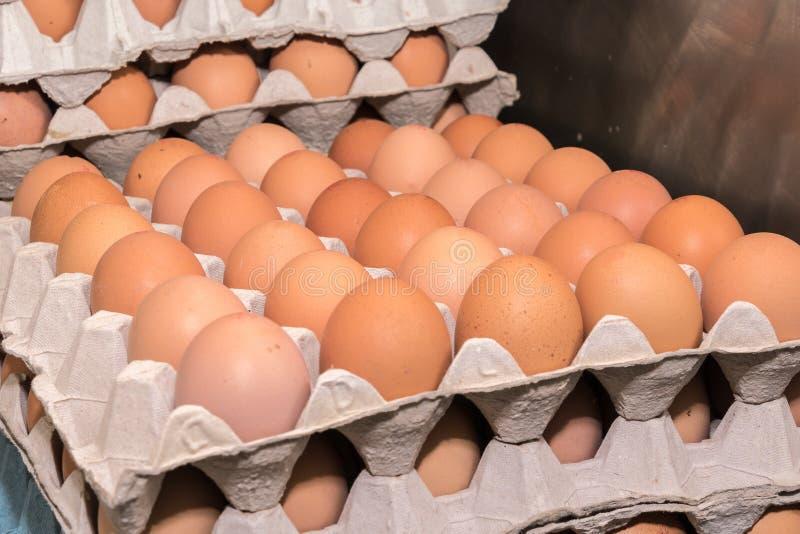 Ovos nas bandejas imagens de stock royalty free