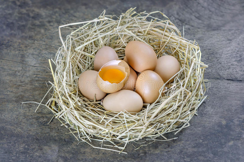 Ovos no ninho imagem de stock