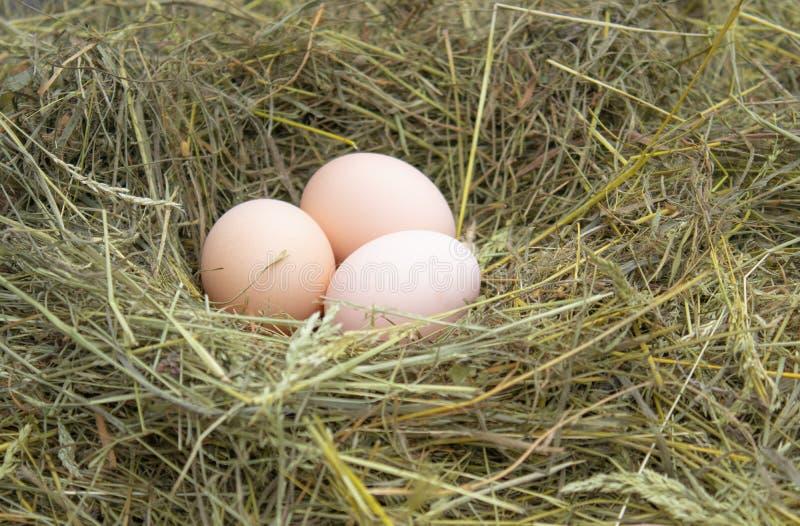 Ovos no ovo fresco do ninho no ninho na exploração agrícola foto de stock