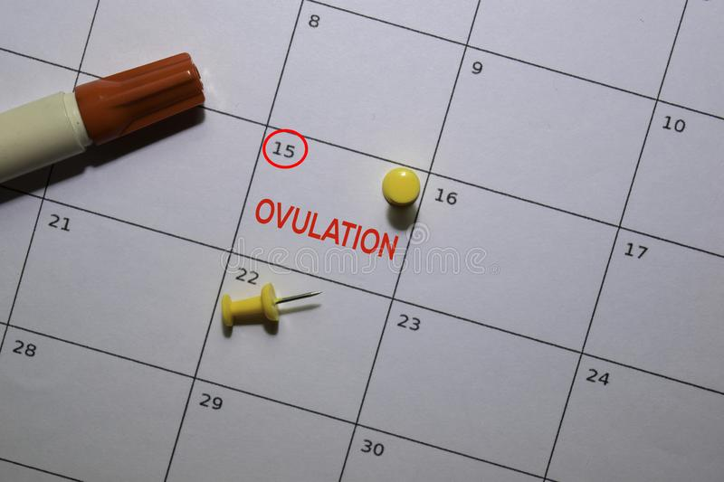 Ovulation write on calendar. Date 15. Reminder or Schedule Concepts royalty free stock photo
