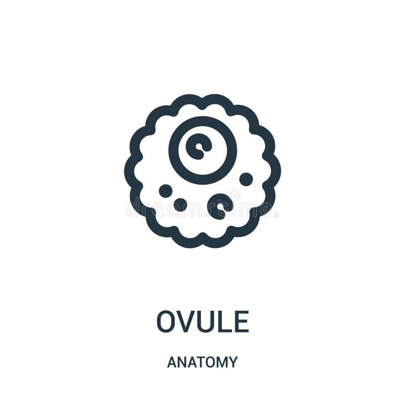 Ovulumikonenvektor von der Anatomiesammlung Dünne Linie Ovulumentwurfsikonen-Vektorillustration Lineares Symbol für Gebrauch auf  lizenzfreie abbildung