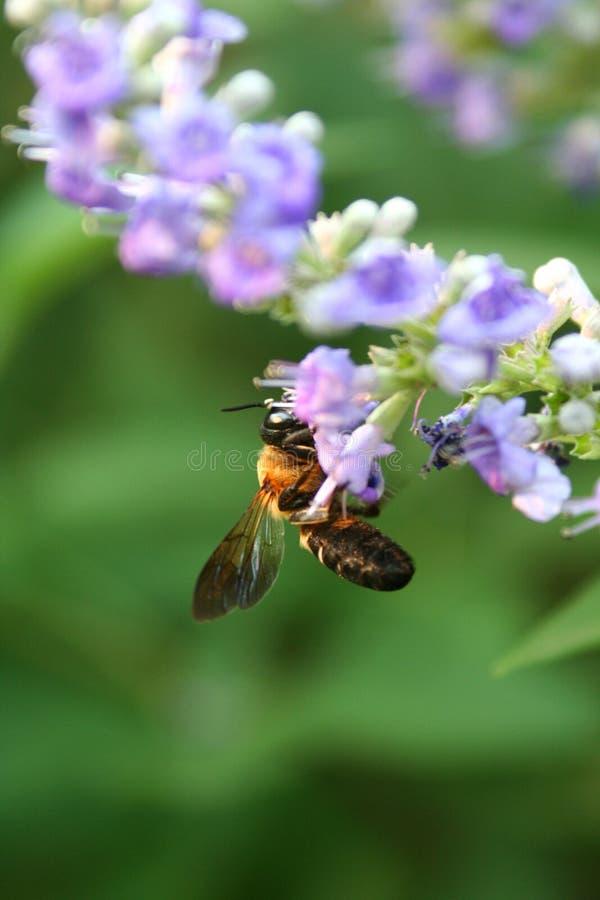 owad głodny zdjęcie royalty free