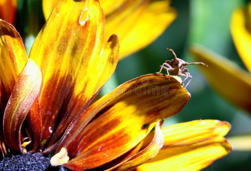 owad kwiatów makro zdjęcie royalty free
