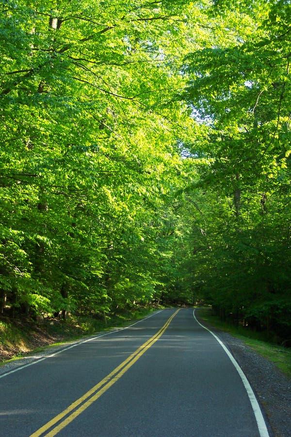Owen creek road jest zdjęcia stock