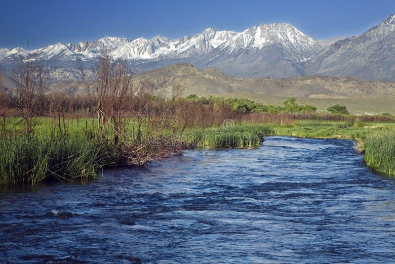 Owens River Sierra royalty free stock photo