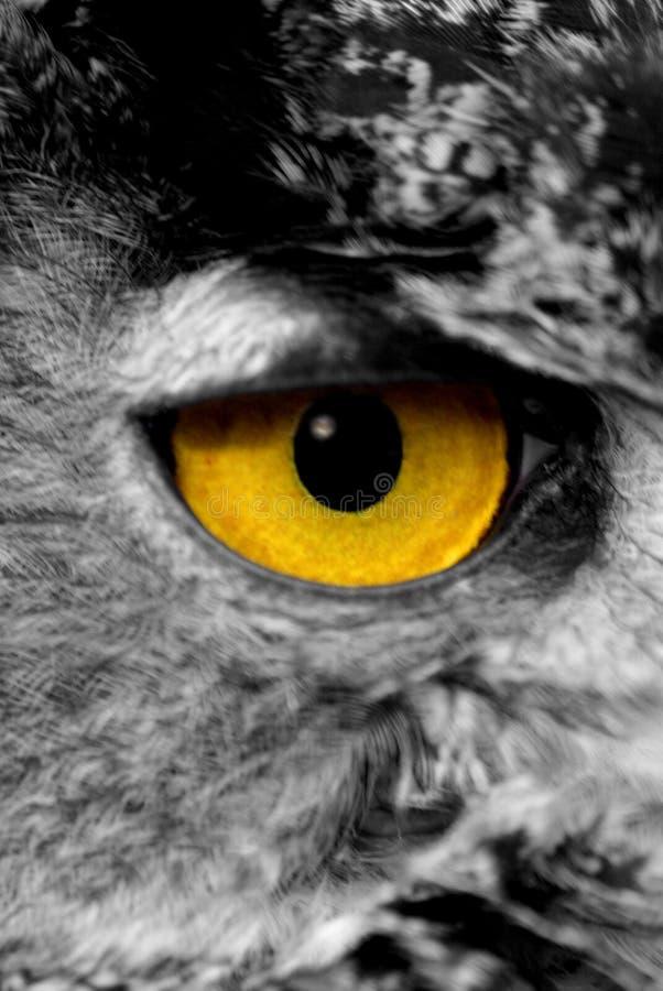 Owlöga arkivfoton