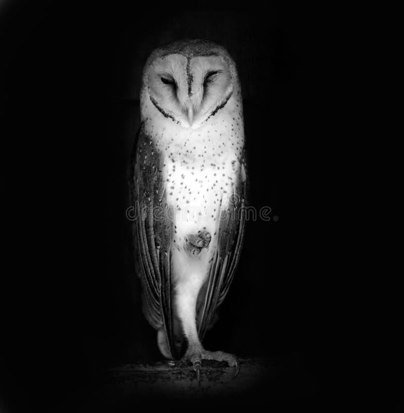 Download Owl stock image. Image of animal, natural, night, seek - 13282925
