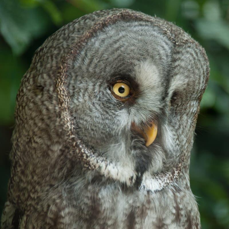 Download Owl 2 stock photo. Image of great, wings, bird, wildlife - 15483996