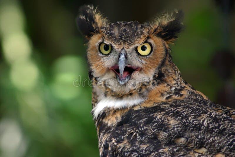 Download Owl stock photo. Image of great, creature, glare, prey - 203280