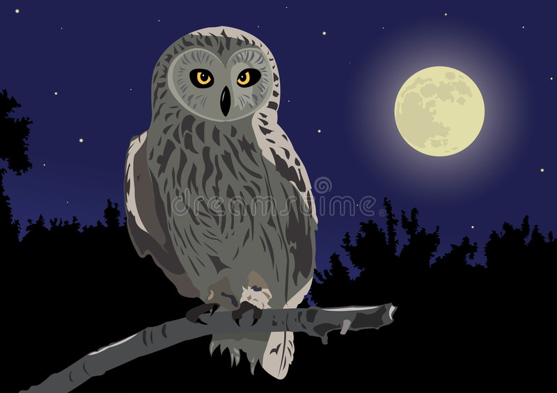 Owl. The image of the owl sitting on a branch by a moonlight night