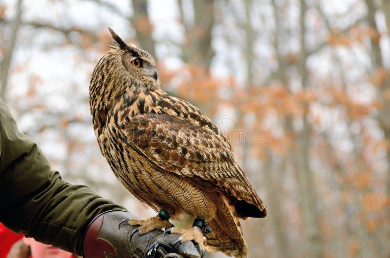 Download Owl stock image. Image of perched, beautiful, eyes, beak - 24363731