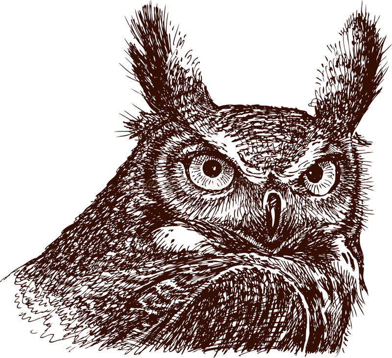 Free Owl Royalty Free Stock Image - 25165846