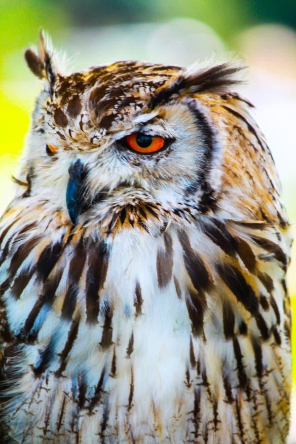 owl arkivfoton