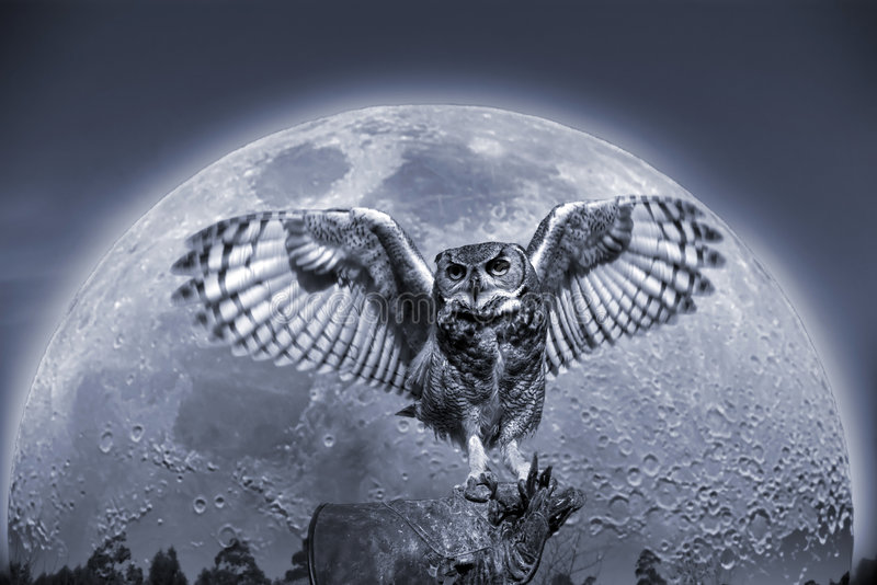 Owl stock illustration
