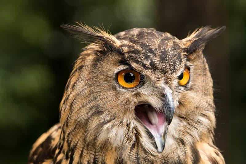 owl royaltyfria foton