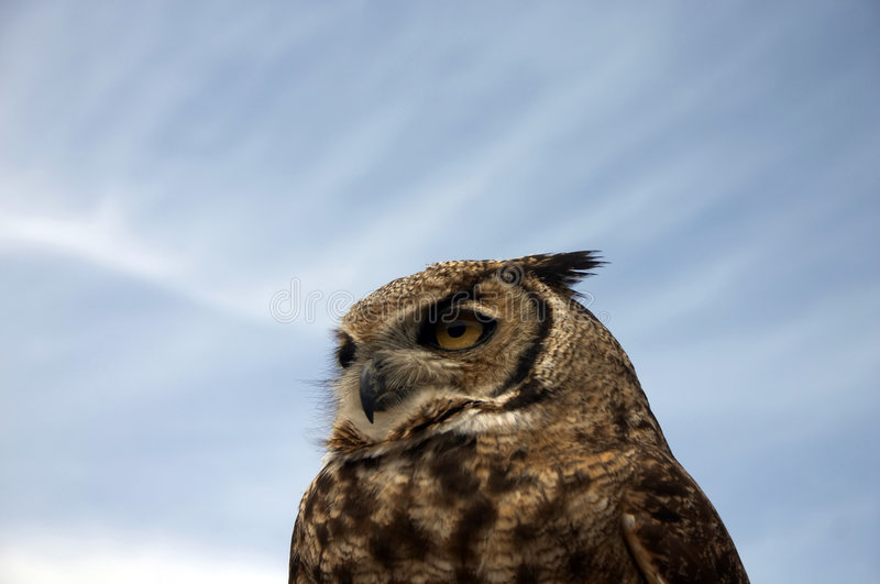 Download Owl stock photo. Image of pupil, strength, round, nighttime - 901800