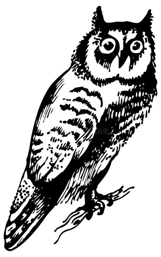 Download Owl bird stock illustration. Image of silhouette, black - 24983160