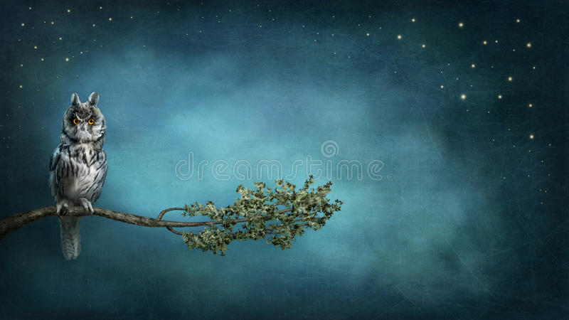 Download Owl bird stock image. Image of copy, fable, fairytale - 28434449