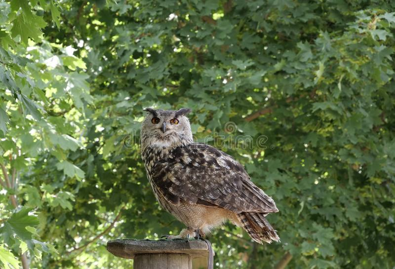 Owl, Bird, Fauna, Bird Of Prey stock photos