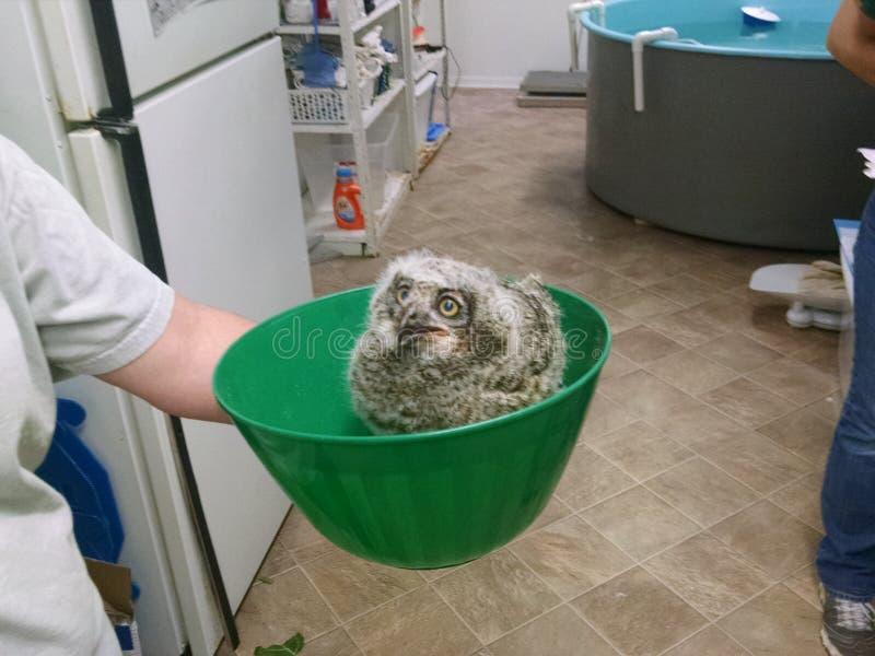 Owl Bowl royaltyfria bilder