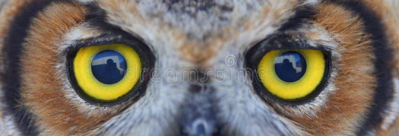 Owl eye stock photography