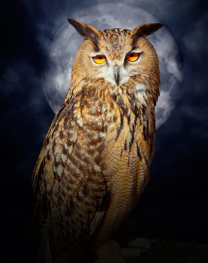 owl för natt för fullmåne för fågelbuboörn arkivfoto