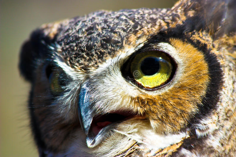 Owl face closeup stock photo