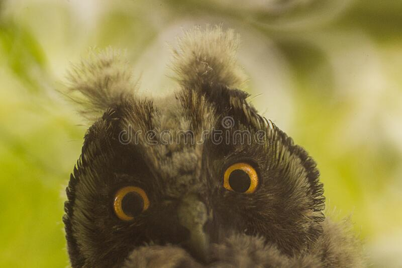 Owl Face Outdoors Free Public Domain Cc0 Image