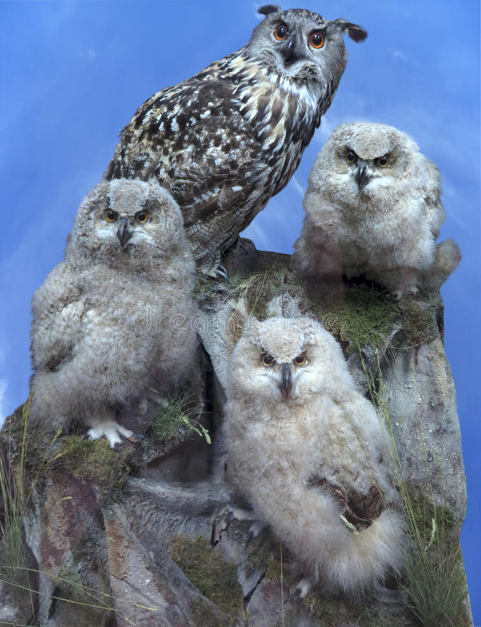 Owl family - parent and three chick over blue sky royalty free stock image