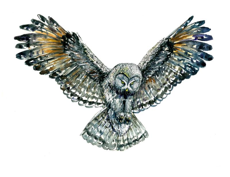 Owl flying with whide open wings, trying to catch something with its claws. Front view, isolated watercolor illustration royalty free illustration
