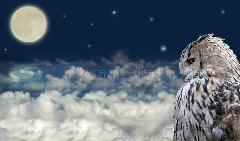 Owl at full moon. Owl at dark sky with large clouds and full moon