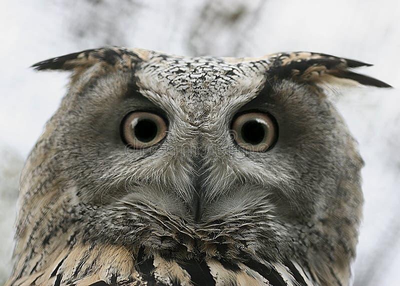 Owl Glance Royalty Free Stock Image