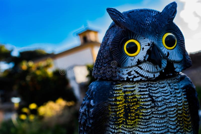 An owl royalty free stock image