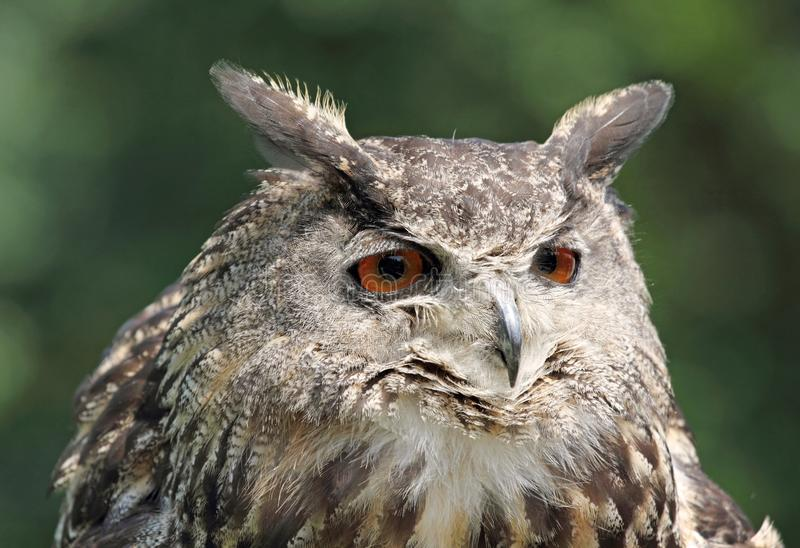Download Owl in nature stock photo. Image of wildlife, animal - 26220350