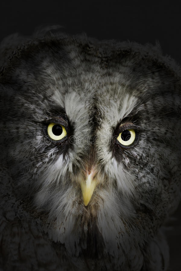 Owl by night. Evil eyes eagle owl by night royalty free stock photos
