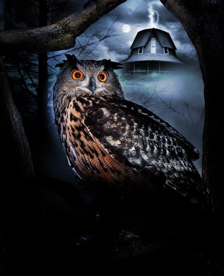 Owl och spökat hus royaltyfria foton