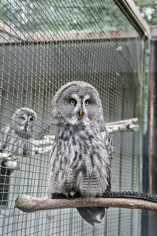Owl outdoor shot. Owl typical species for many countries. Owl in zoo cage. Animal shot capturing owl. Wild life. Gorgeous big bird sit in cage. Calm and stock image