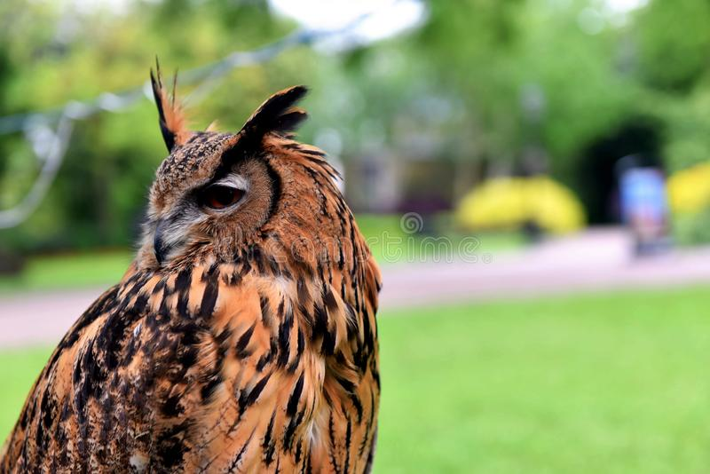 Owl in a park in York. York beautiful city in the UK. Watching monuments, old streets, cathedrals, churches.York is a walled city in northeast England that was stock image