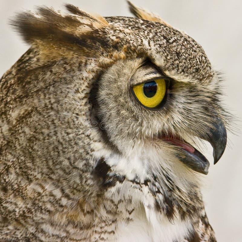 Owl Profile stock photos