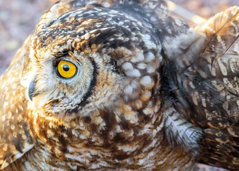 Owl Profile Namibia lizenzfreie stockbilder
