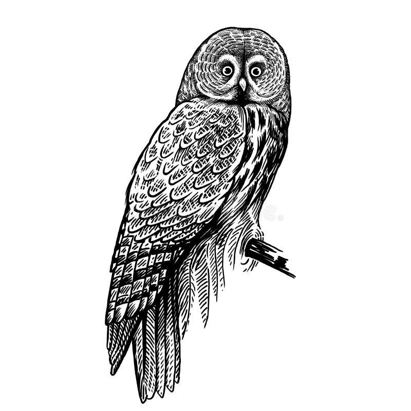 owl Rov- skogfågel Skissa handteckningen svart white royaltyfri illustrationer