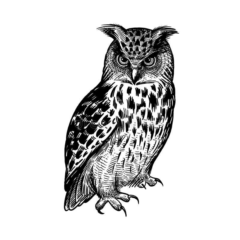 owl Rov- skogf?gel Skissa handteckningen svart white vektor illustrationer