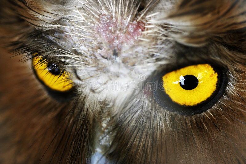 Owl's eye stock photos