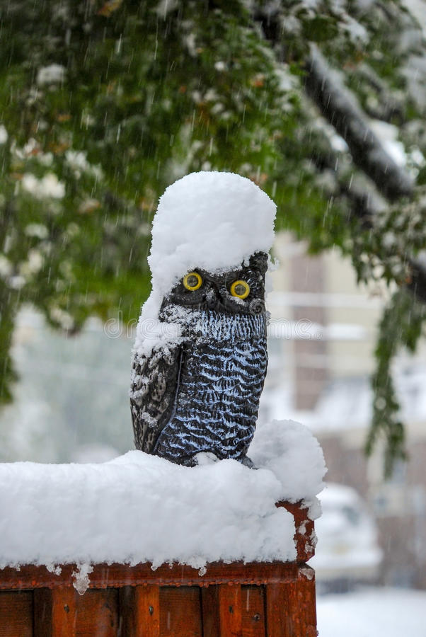 Owl in snow storm stock photography