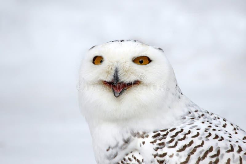 Owl Speaking nevado foto de stock