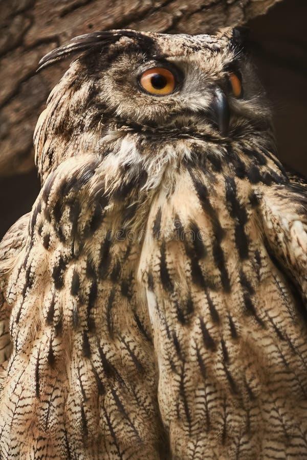 Owl Stares Towards royaltyfria foton